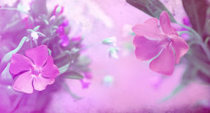 Grunge flowers background Royalty Free Stock Photos