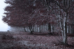 Grunge forest. Horror atmosphere Stock Photo