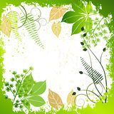 Grunge frame with plants elements Royalty Free Stock Image