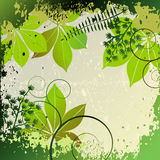 Grunge frame with plants elements Royalty Free Stock Photo