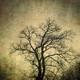 Grunge frame with tree silhouettes Royalty Free Stock Photo