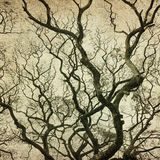 Grunge frame with tree silhouettes Stock Photography