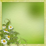 Grunge frames with beautiful daisy Royalty Free Stock Images