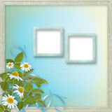 Grunge frames with beautiful daisy Stock Images