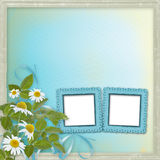 Grunge frames with beautiful daisy Royalty Free Stock Photos
