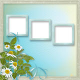 Grunge frames with beautiful daisy Royalty Free Stock Image