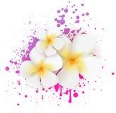 Grunge frangipani flowers Stock Photos