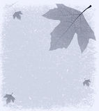 Grunge frosty Background. Grunge Autumnal Frosty Background - Sycamore leaf on a textured backdrop of old paper, with space for text or images. EPS10 vector Royalty Free Stock Photography