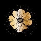 Grunge golden cosmos flower with burst on a black background . Vector illustration for postcards, calendars, posters, t. Shirts, prints, cards, flyer Royalty Free Stock Images