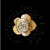 Grunge golden rose flower with burst on a black background . Vector illustration for postcards, calendars, posters, t. Shirts, prints, cards, flyer Royalty Free Stock Photography
