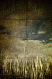Grunge grain. A grunge and yellow field of grain Stock Images