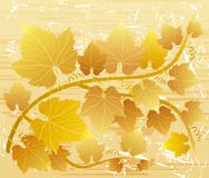 Grunge grape leaves Stock Image