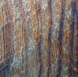 Grunge gray wooden texture background Royalty Free Stock Photo