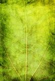 Grunge green background Stock Image