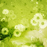 Grunge green background with daisies Royalty Free Stock Images