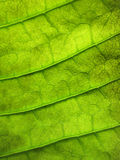 Grunge green leaf Pattern. Texture Stock Photos