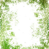 Grunge green texture Stock Photo