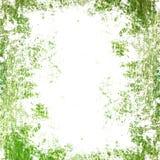 Grunge green texture Stock Photo