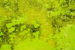 Grunge Green and Yellow Abstract Painted Background Stock Photo