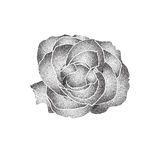 Grunge halftone black and white rose isolated on a white background. Vector illustratoin with halftone dots texture for. Popart, trends design Royalty Free Illustration