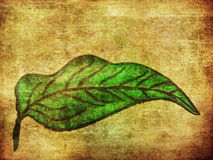 Grunge hand drawn green leaf Stock Photo