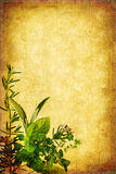 Grunge Herb Background. Herbs form a border on grunge background, with lots of copy-space Stock Images