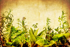 Grunge Herbs. Herbs on a grunge background, with copy-space.  Photo-based illustration combining sandstone and wheat textures with a border of fresh herbs Royalty Free Stock Photos