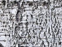 Grunge Holzbeschaffenheit Lizenzfreies Stockbild