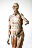 Grunge human anatomy Stock Image