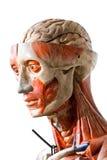 Grunge human anatomy. Cloed up of grunge human anatomy royalty free stock photos