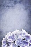 Grunge Hydrangea Stock Photography