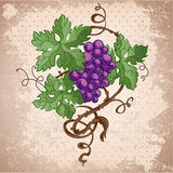 Grunge illustration of colorful grapes Royalty Free Stock Photos