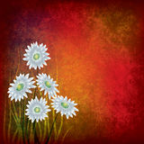 Grunge illustration with white flowers on red Royalty Free Stock Photo