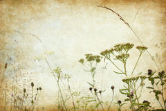 Grunge image with blooming wildflowers Royalty Free Stock Image
