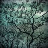 Grunge image of dark forest, perfect halloween background Royalty Free Stock Photos