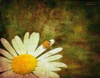 Grunge image of a ladybug royalty free illustration