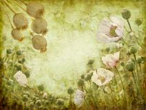 Grunge image of poppies Royalty Free Stock Photo