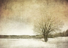 Grunge image of a tree over grunge background Royalty Free Stock Images