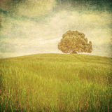 Grunge image of a tree over grunge background Royalty Free Stock Photo