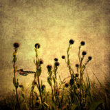 Grunge image of wild herbs with butterfly Stock Photography
