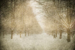 Grunge image of winter landscape Royalty Free Stock Images