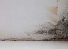 Grunge Interior. Studio template Royalty Free Stock Images