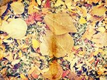 Grunge jesieni tło z nieżywymi liśćmi Obrazy Royalty Free