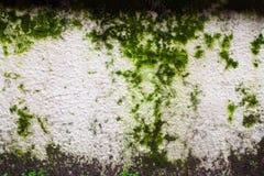 Grunge Kamienna ściana Zdjęcia Stock