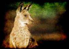 Grunge kangaroo Stock Image