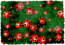 Grunge ladybugs Stock Photos