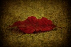 Grunge leaf Royalty Free Stock Photography