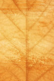 Grunge Leaf Abstract Background stock images