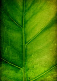 Grunge leaf background. Stock Photos