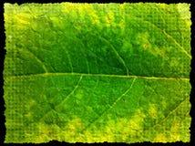 Grunge leaf background Stock Photos